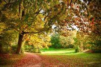 Herbstlicher Park in Sasel